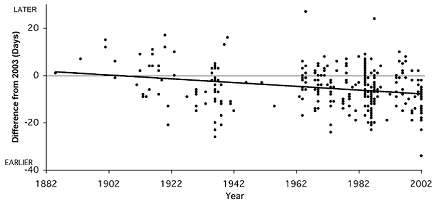 Arnold Arboretum flowering times by year (440)