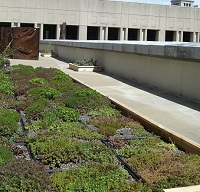 City Hall Green Roof Demonstration
