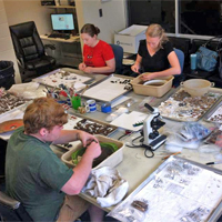 Volunteers at Archaeology Lab (200)